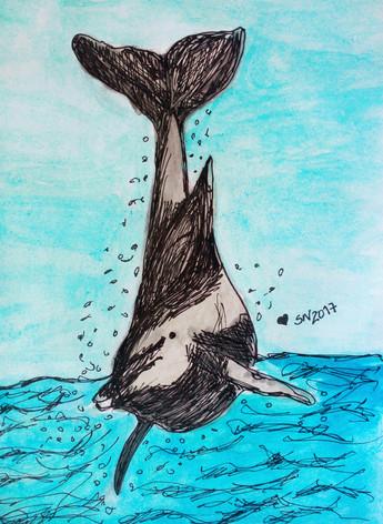 Dolphin/Golfinho