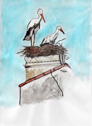 Storks/Cegonhas