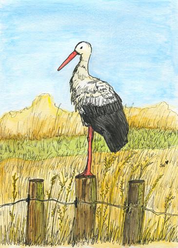 Stork/Cegonha