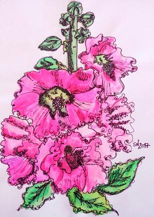 Hollyhock/Malva rosa