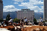 Ride for the Brand Cattle Drive.jpg