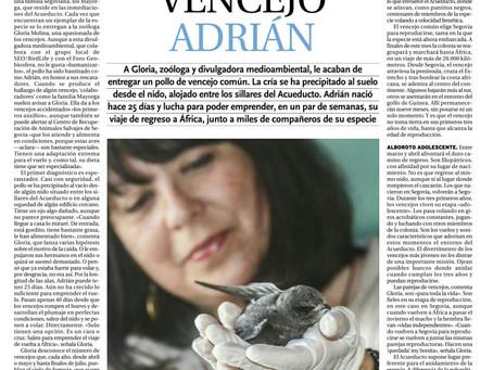 El viaje del vencejo Adrián, entrevista de Sergio Arribas a Gloria Molina en El Día de Segovia