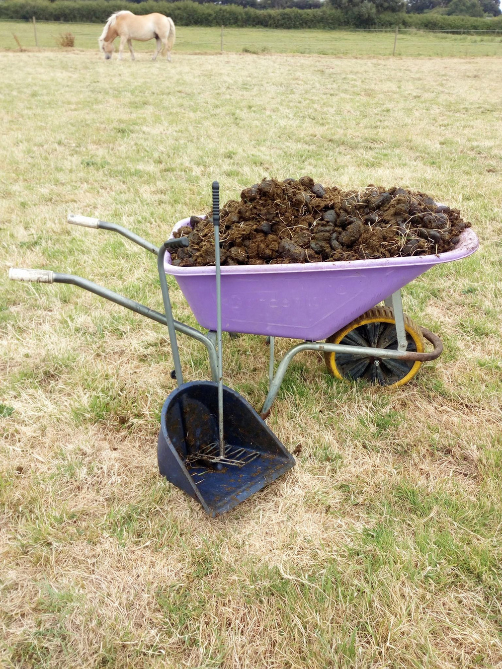 When you don't think you can get anymore poo in the wheelbarrow #horse care