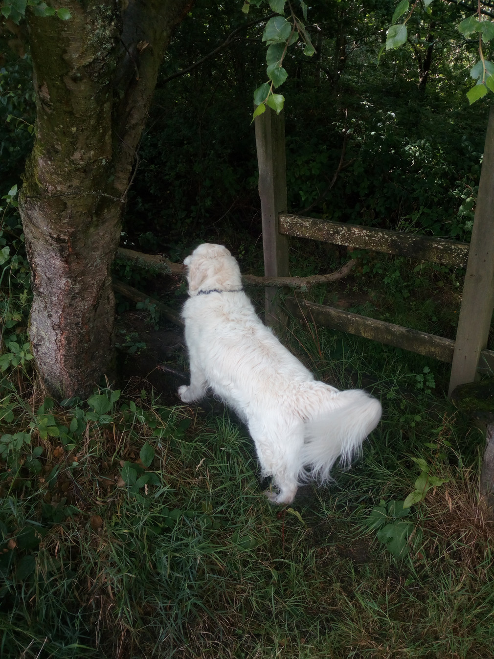 Is he going to get the stick through the gap?