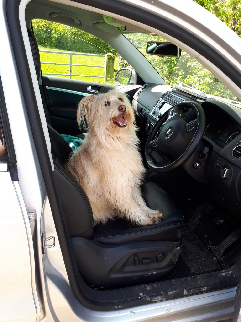 New driver