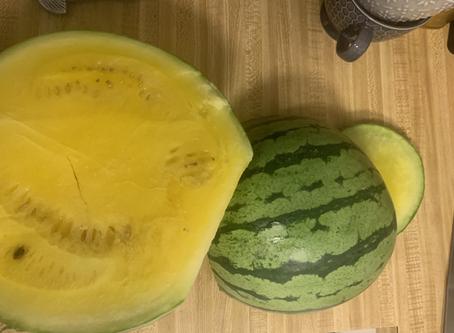 A Yellow Watermelon?
