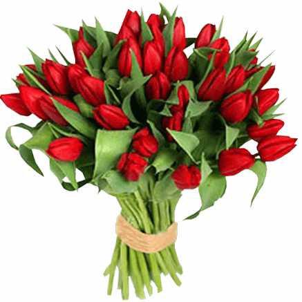 35 красных тюльпанов