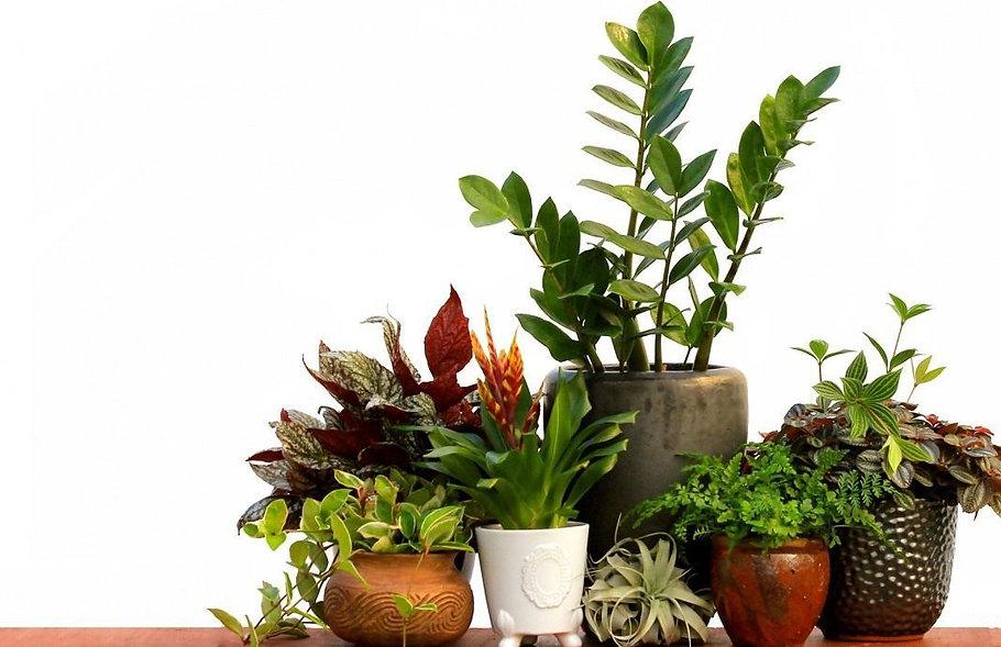 Комнатные цветы, горшечные цветы купить в Ижевске с доставкой в офис и дом. Пересадка растений с выездом.jpg