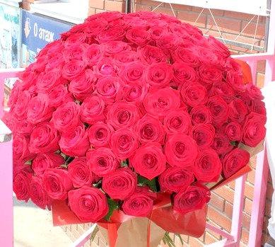 151 красная роза