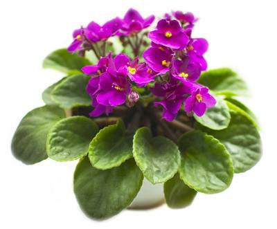 violet-2802714_960_720.jpg