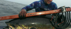 On the job using Koah Spearguns