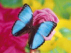 Fantastic+Butterfly+14.jpg