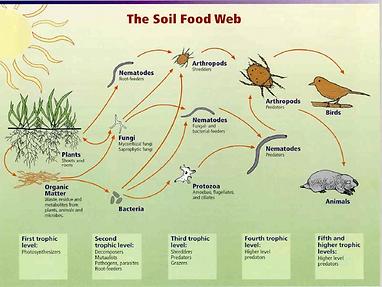 soil food web.png