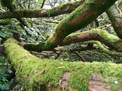 Moss in Northampton