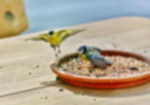 birds-4228838_1920.jpg