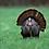 Thumbnail: Turkey Deposit
