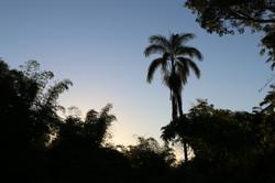 PAPAs Jamaica 2015_0266.JPG