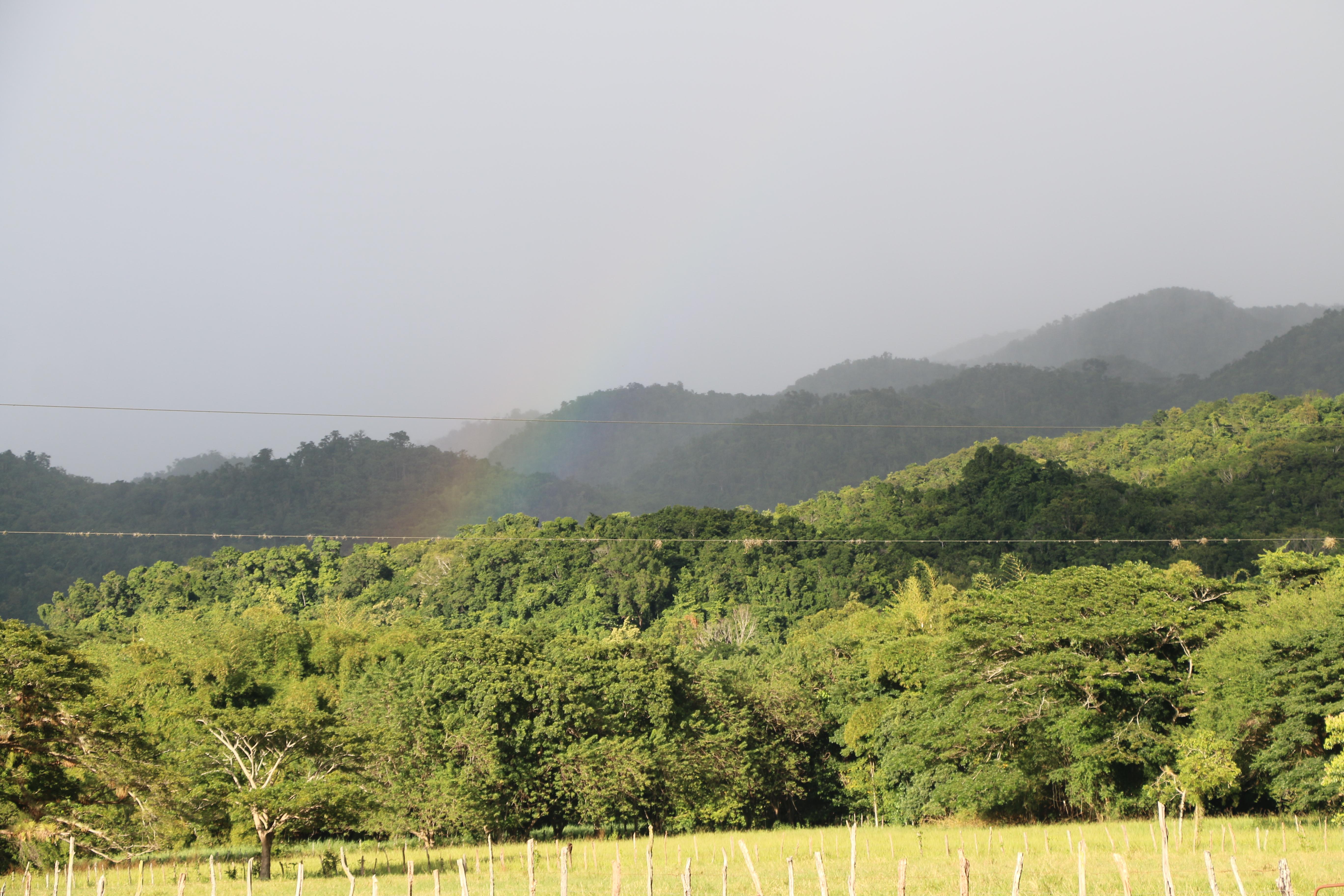 PAPAs Jamaica 2015_1474.JPG