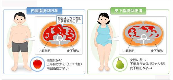 内臓脂肪とは?axis mishuku(アクシス  ミシュク) 三軒茶屋・池尻大橋・三宿エリアのパーソナルトレーニングジム