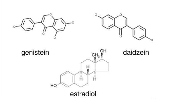 structure of phytoestrogens and estrogen hormone