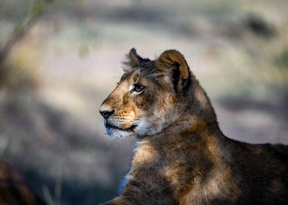 MasaiMara-9.jpg