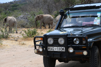 Safari in Kenia | MAREFU SAFARIS