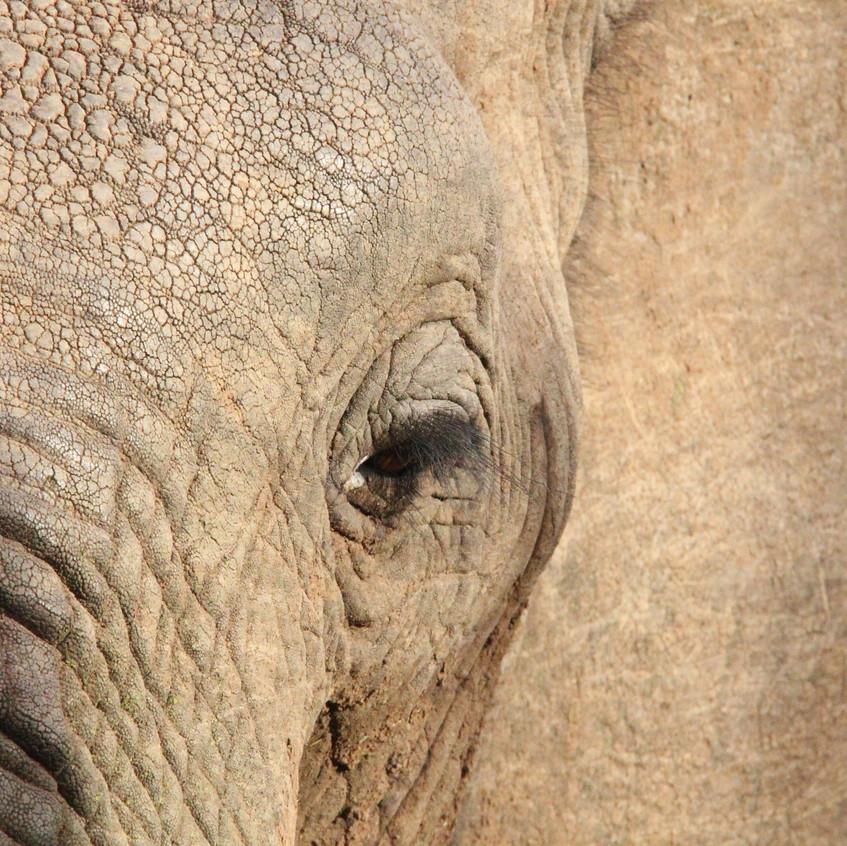 Elefant am Ithumba Wasserloch