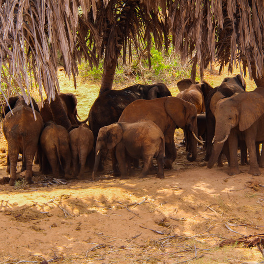 Tsavo Ost Kenia MAREFU Safaris