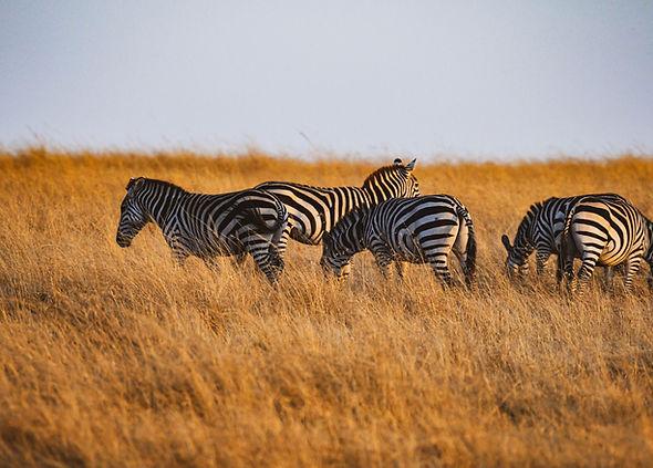 MasaiMara-11.jpg