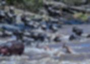 MasaiMara-13.jpg