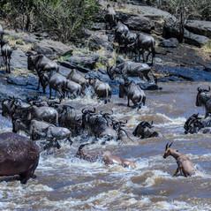 Crossing am Mara River   MAREFU Safaris Keniareisen