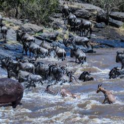 Crossing am Mara River | MAREFU Safaris Keniareisen