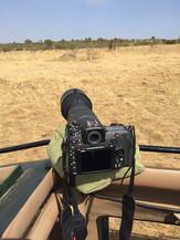 Safari in Kenia | MAREFU SAFARIS
