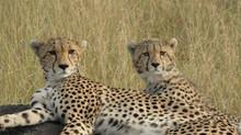 Spezial Angebot: 3-Tages Maasai Mara Tour
