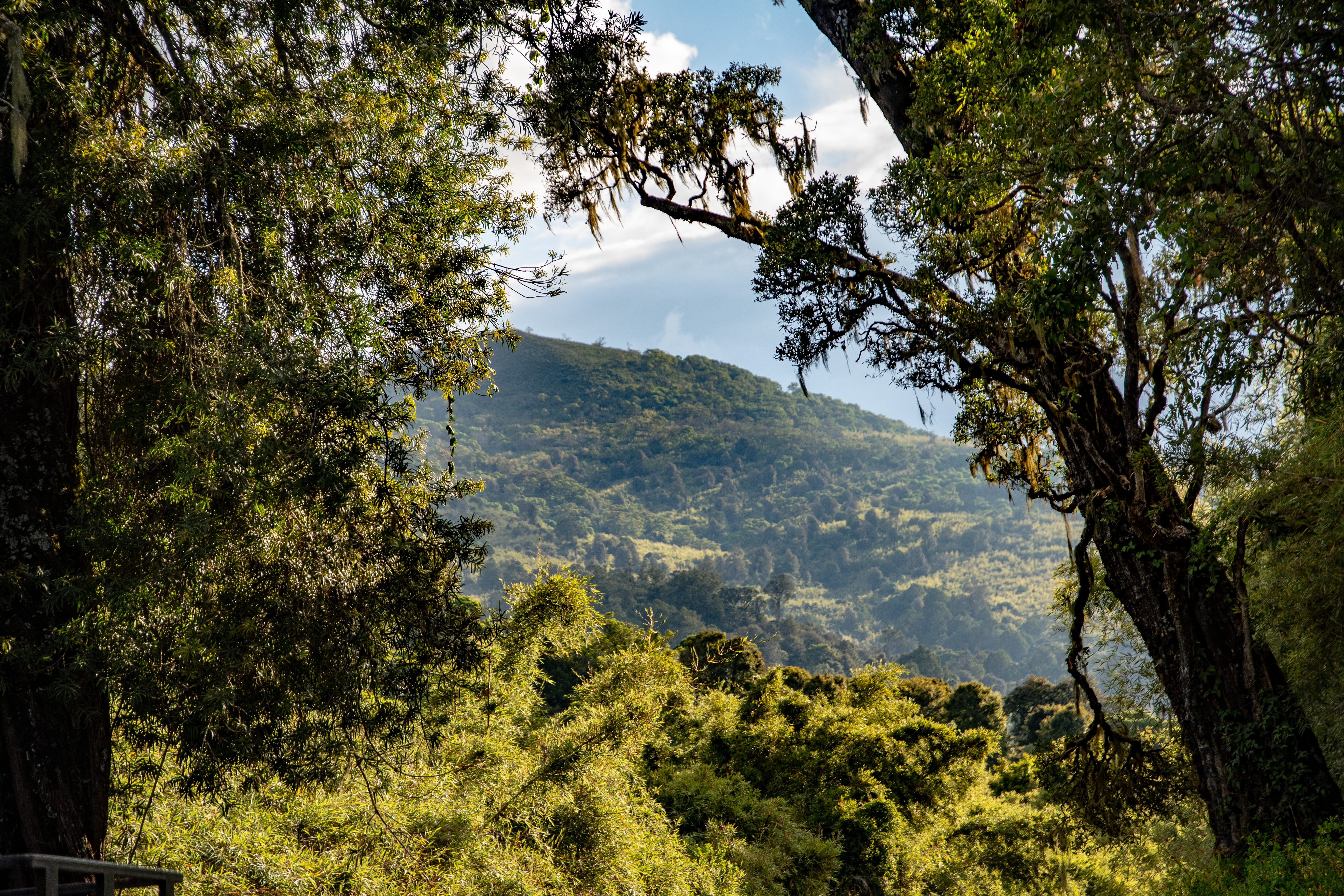 Aberdare Nationalpark | MAREFU