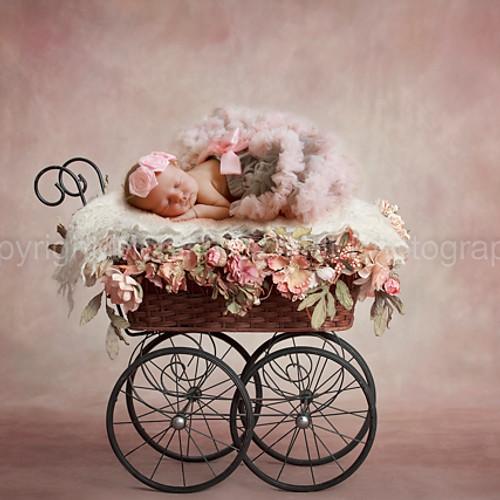 Newborn Daisy