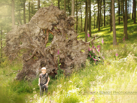 Discovering Macclesfield Forest