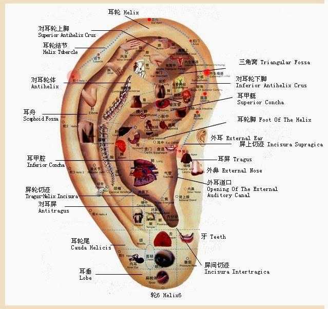 Reflexologia da Orelha