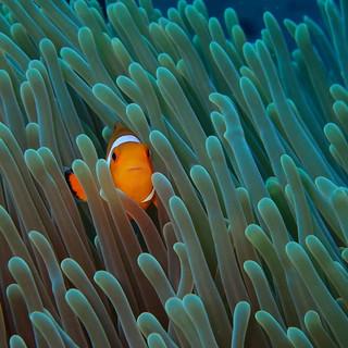 underwater nemo.jpg