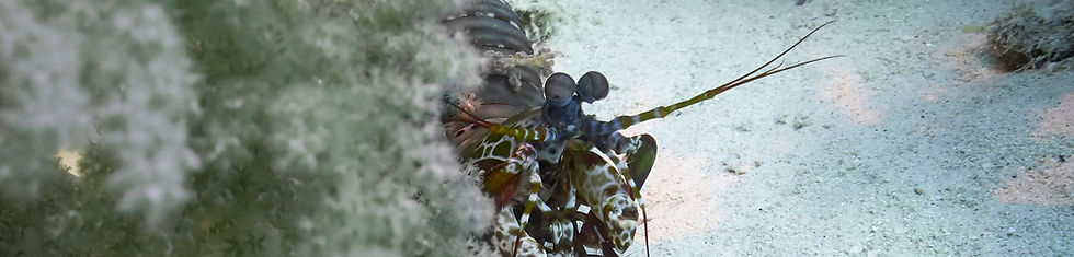 Mantis - F, I.jpg