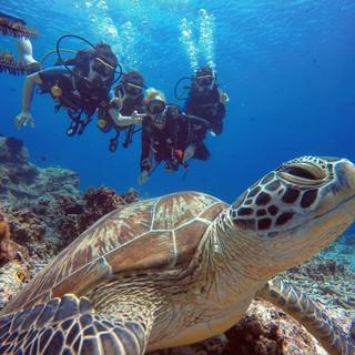 turtle with people - F, I.jpg