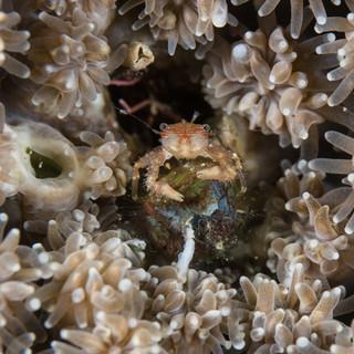 st_crab - F.jpg
