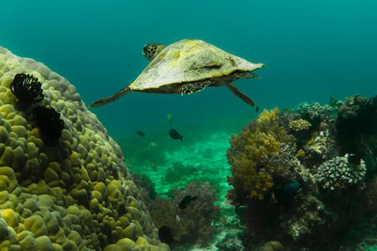 Quiet turtle