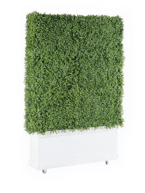 Boxwood Hedge Wall