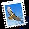 Mac-OS-X-10.10-Yosemite-Mail-icon-1024x1