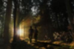 woods sunbeams V2.jpg