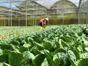 Thinking Vertically: Sustainable Farming Practices through Tech