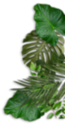 pile-of-tropical-leaves.png