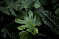 tropical-leaves-in-shade.jpg