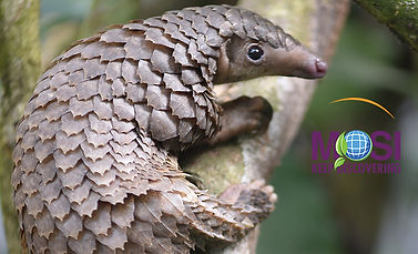 cute pangolin.jpg